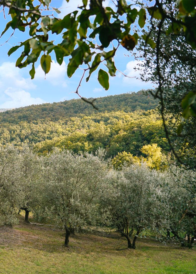 https://www.villalasciolta.it/wp-content/uploads/2016/02/via-francigena-toscana-1-1.jpg
